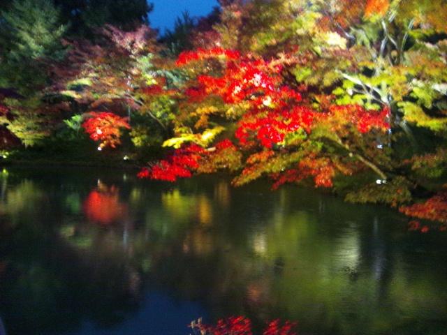 秋の高台寺   ライトアップ