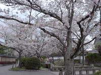tetsugakunomichi3
